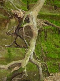 TreeSpirit.JPG
