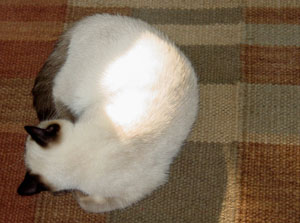 Cat Asleep on Rug