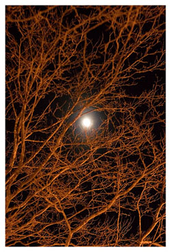 moon through bare limbs