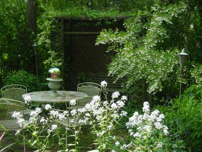 White Flower Scene