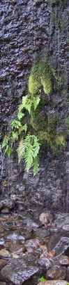 Fern out of Rock