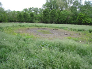 Vernal Pool, dry in Summer