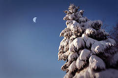 Snow Morning Aching Moon